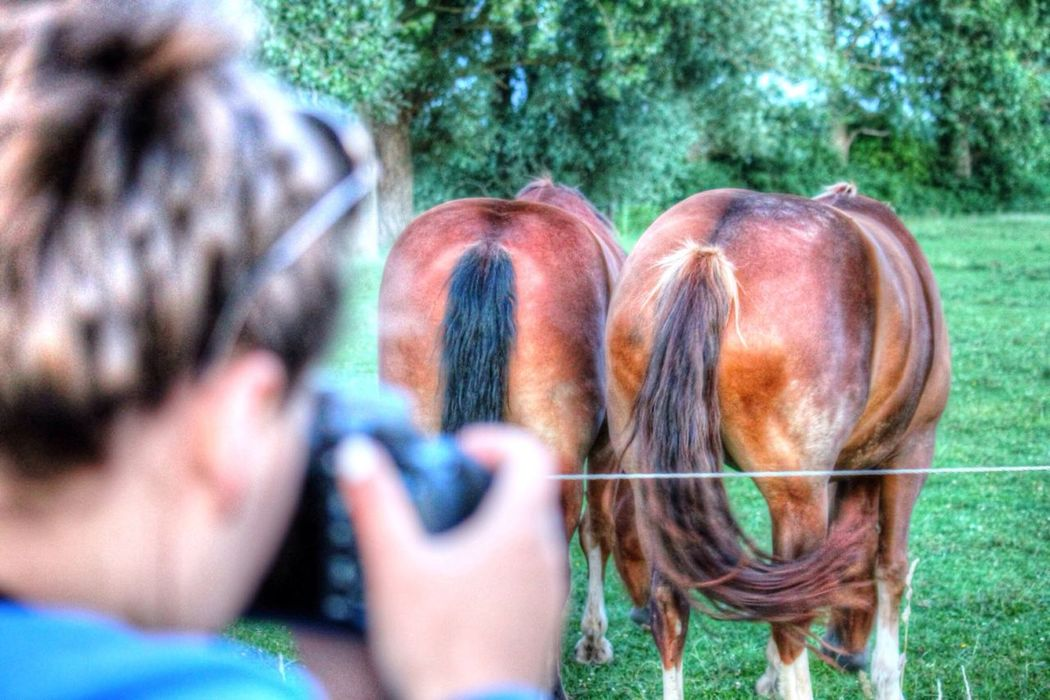 Funny Beckum Horse Asses HDR Hello World Taking Photos Cheese! Nature Check This Out