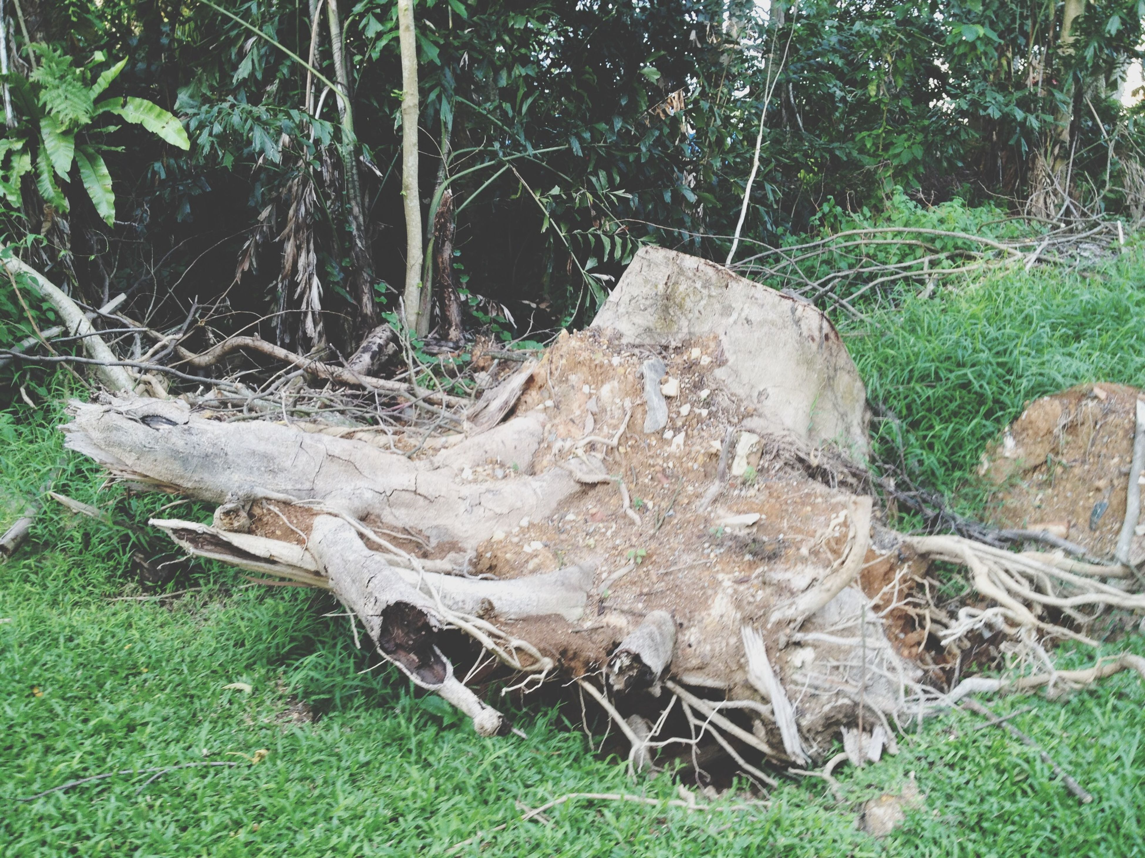 grass, tree, forest, field, nature, tree trunk, growth, log, day, tranquility, grassy, animal themes, plant, outdoors, no people, relaxation, wood - material, green color, wildlife, rock - object