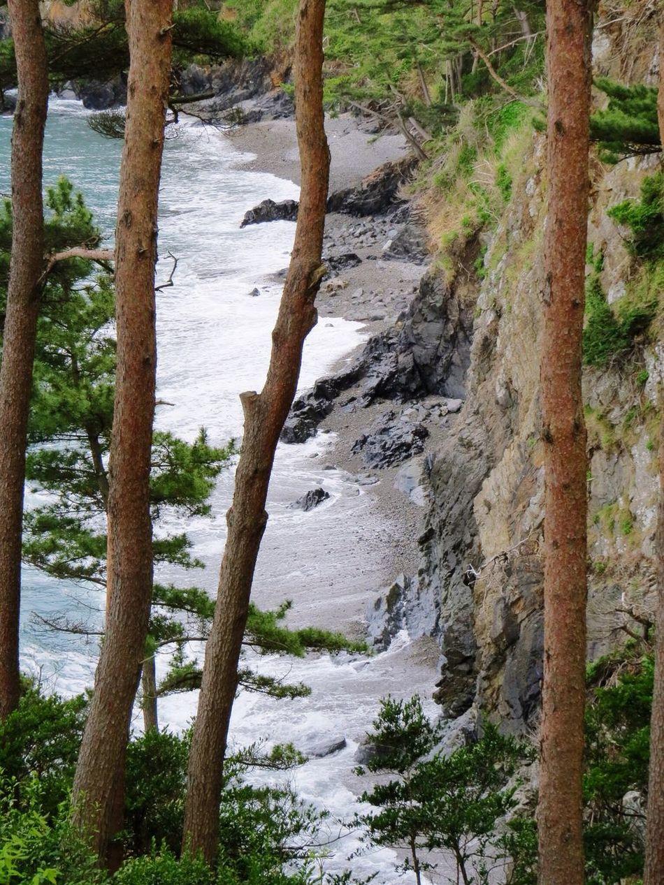 Travel Photography Travel Destinations Japan Iwate 大船渡 Oofunato 碁石海岸 Goisi-Kaigsn(coast) Tranquil Scene Beauty In Nature Nature Seaside Sea Pine Pine Grove Pinetrees