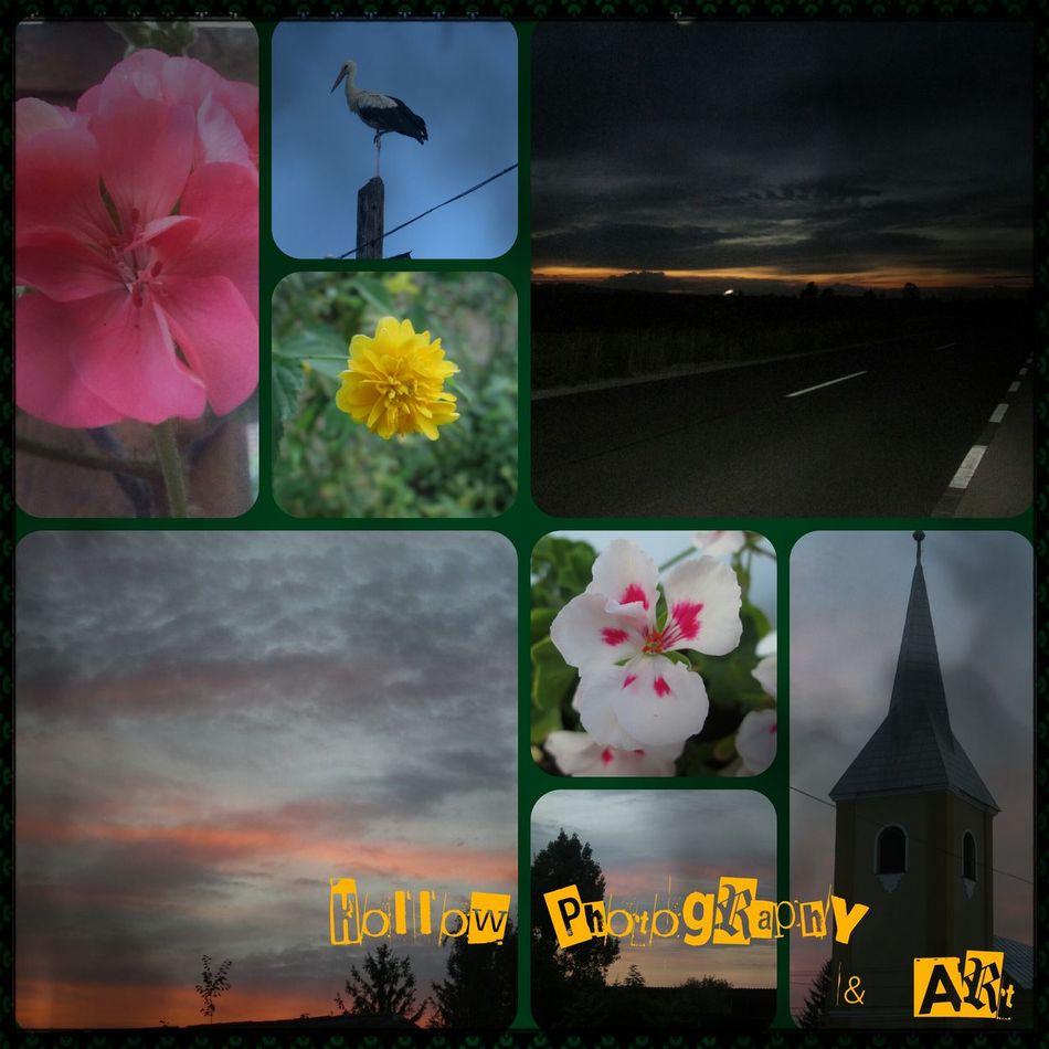 Az e heti fotóim egy mozaikba foglalva Flower World Hello World Photomozaik