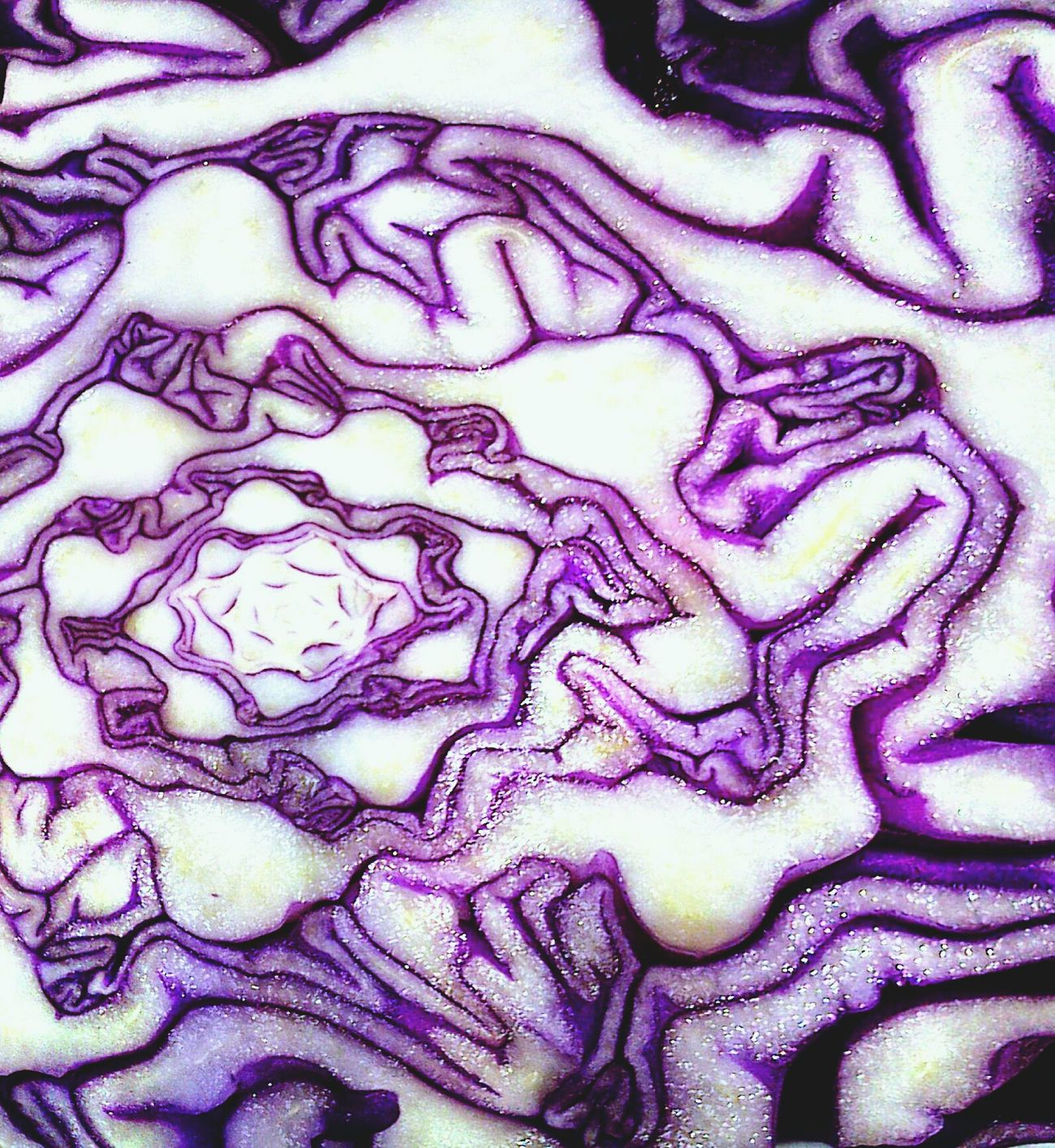 Textures And Surfaces Cabbage First Eyeem Photo Cabbage My Best Photo 2014 Brassica Oleracea Rubra