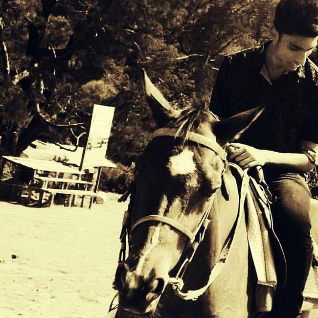 Horse Life Horse Riding Adventurer Adventure Fearless Rider Summer Memories 🌄 Outdoorlife