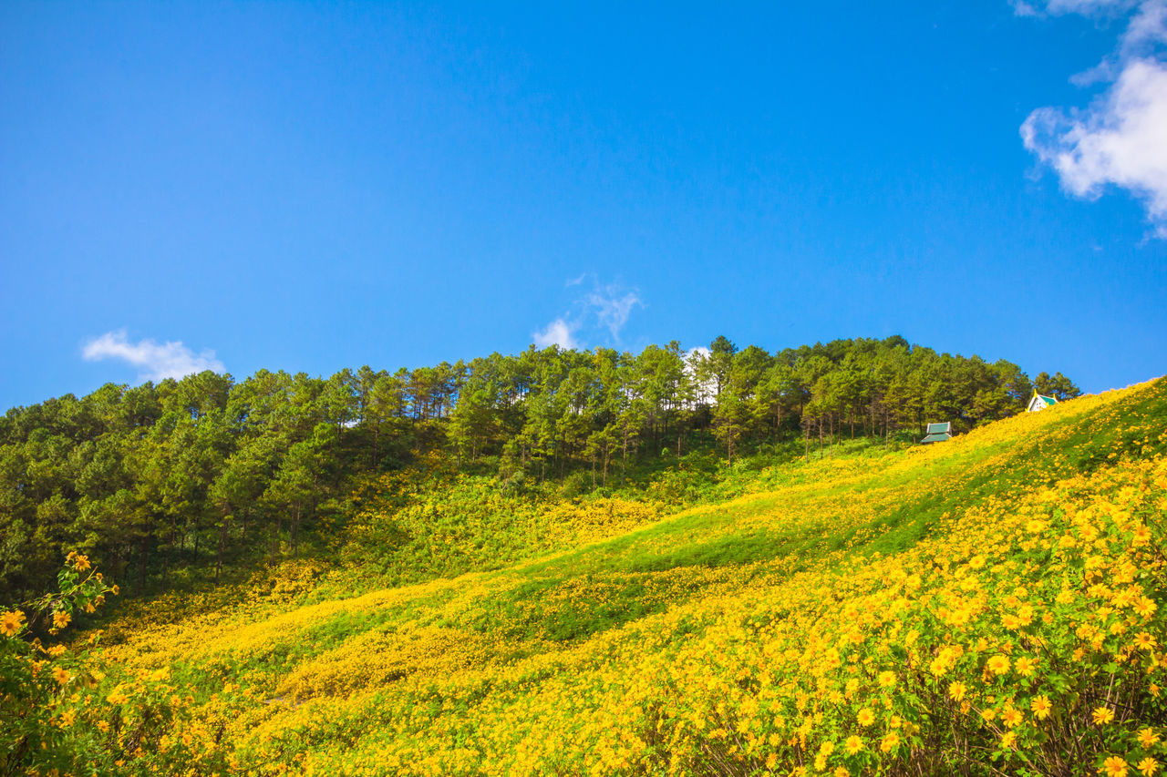 Beauty In Nature Blossom Blue Blue Sky Flora Forest Green Color Growth Hill Landscape Landscapes Maehongson Mexican Mountain Nature Outdoors Plant Scenics Sky Sunflower Thailand Tranquil Scene Tranquility Tree Yellow The Great Outdoors EyeEmNewHere The Great Outdoors EyeEmNewHere