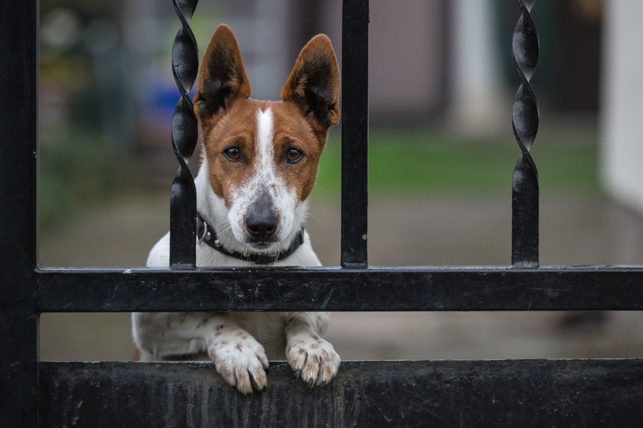Alertness Animal Animal Head  Animal Themes Behind The Gate Close-up Cute Day Eye To Eye Focus On Foreground Gate Guard Dog Mammal No People Outdoors Pets Portrait Selective Focus Village Life Watchdog Zoology Dog