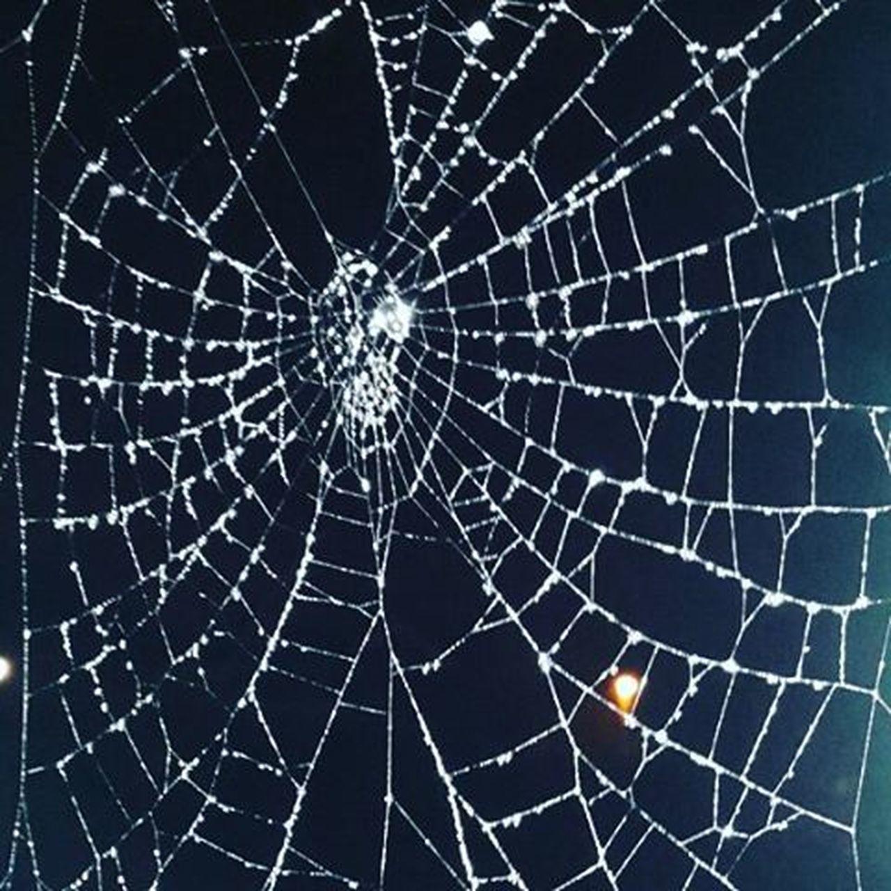 Im petrified of spiders but they make pretty cobwebs!Talentedeightleggedfreaks