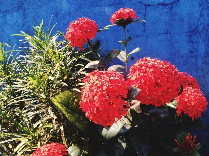 Flors/ Flowers First Eyeem Photo