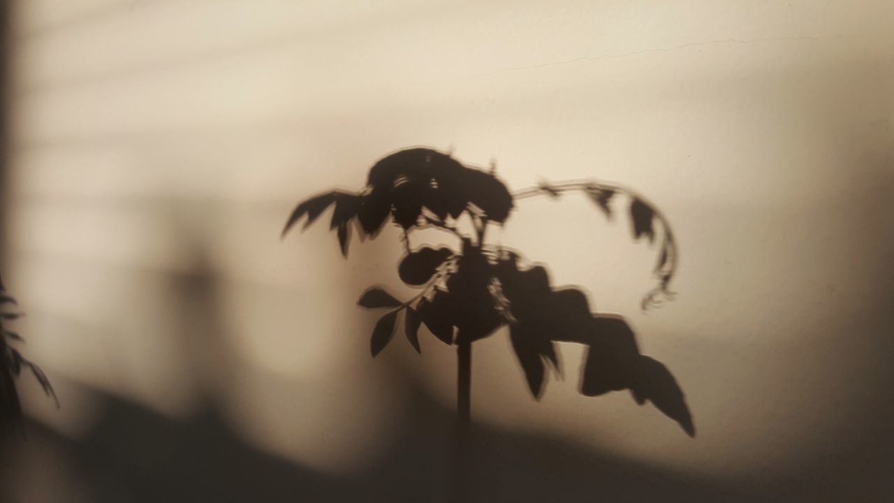 Silhouette Plant Nature Fragility Close-up Indoors  Day Relaxed Vibes Slow Living Shadow Evening Light Curry Plant Warm Light Soft Light Indoors  Leaves Abstract