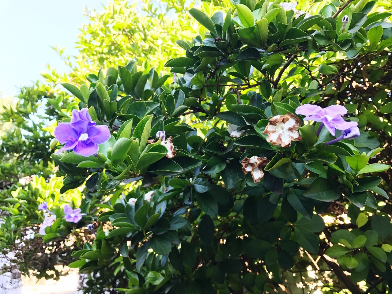 My Garden @my Home