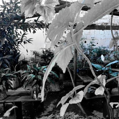 Jardim! Flor! First Eyeem Photo