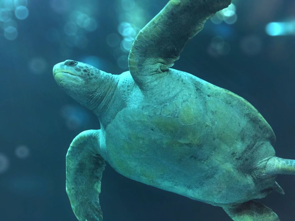 Beautiful stock photos of underwater, Animal Themes, Blue, Focus On Foreground, Lens Flare