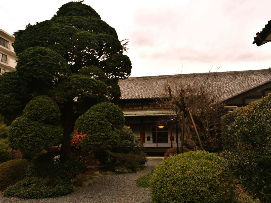 Tree Built Structure Architecture Green Color No People Building Exterior Sky Outdoors Day Japan Shinsengumi 日野本宿
