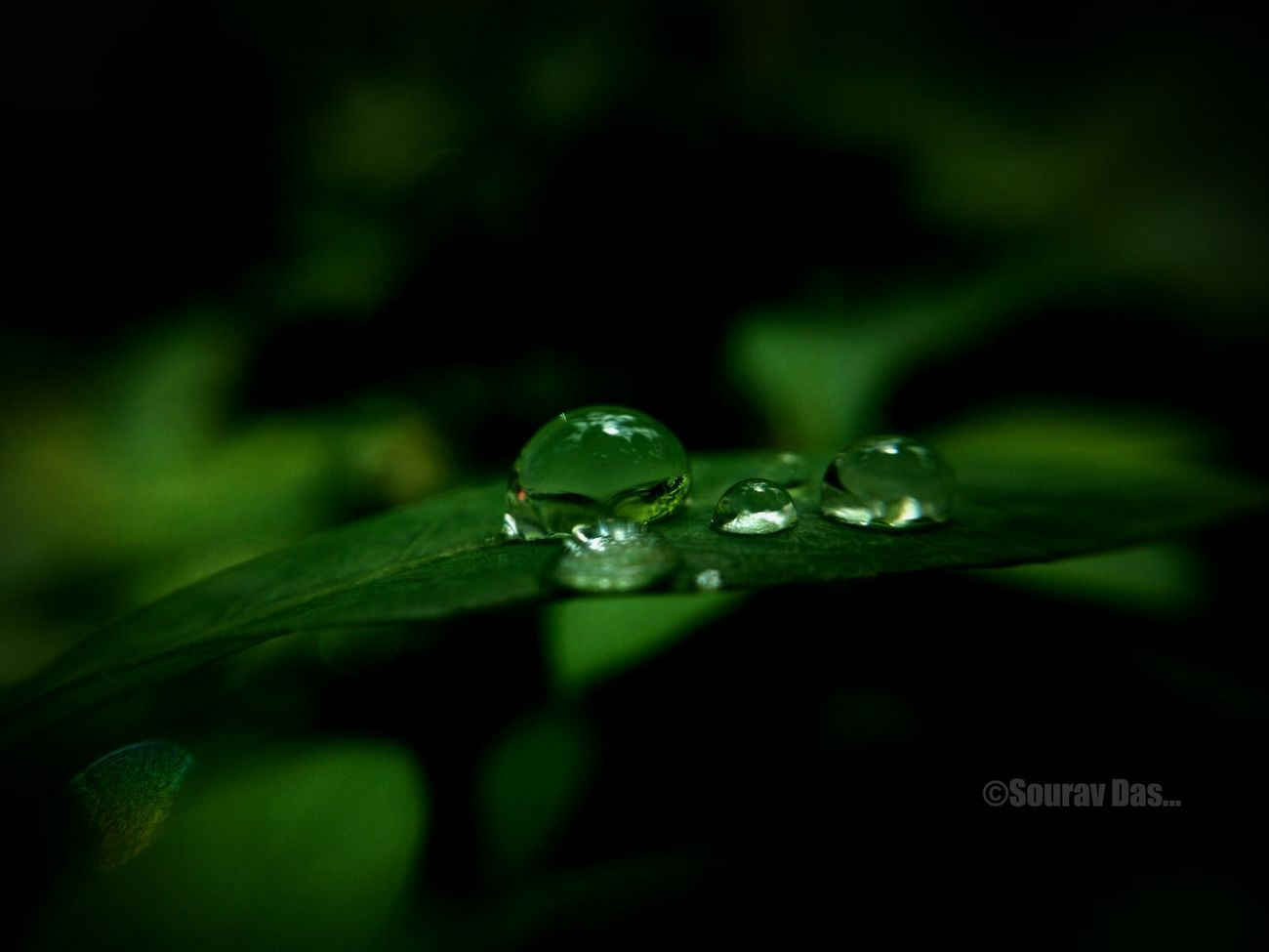 Rain Drops Rain Drops On Leaves Rain Droplets Green Color Close-up No People Selective Focus Leaf One Animal Animal Themes Nature Animals In The Wild Plant Animal Wildlife Beauty In Nature Day Outdoors Likes4likes Colours Of India EyeEm Team Likeforlikers Macro Photography Beauty In Nature Nature