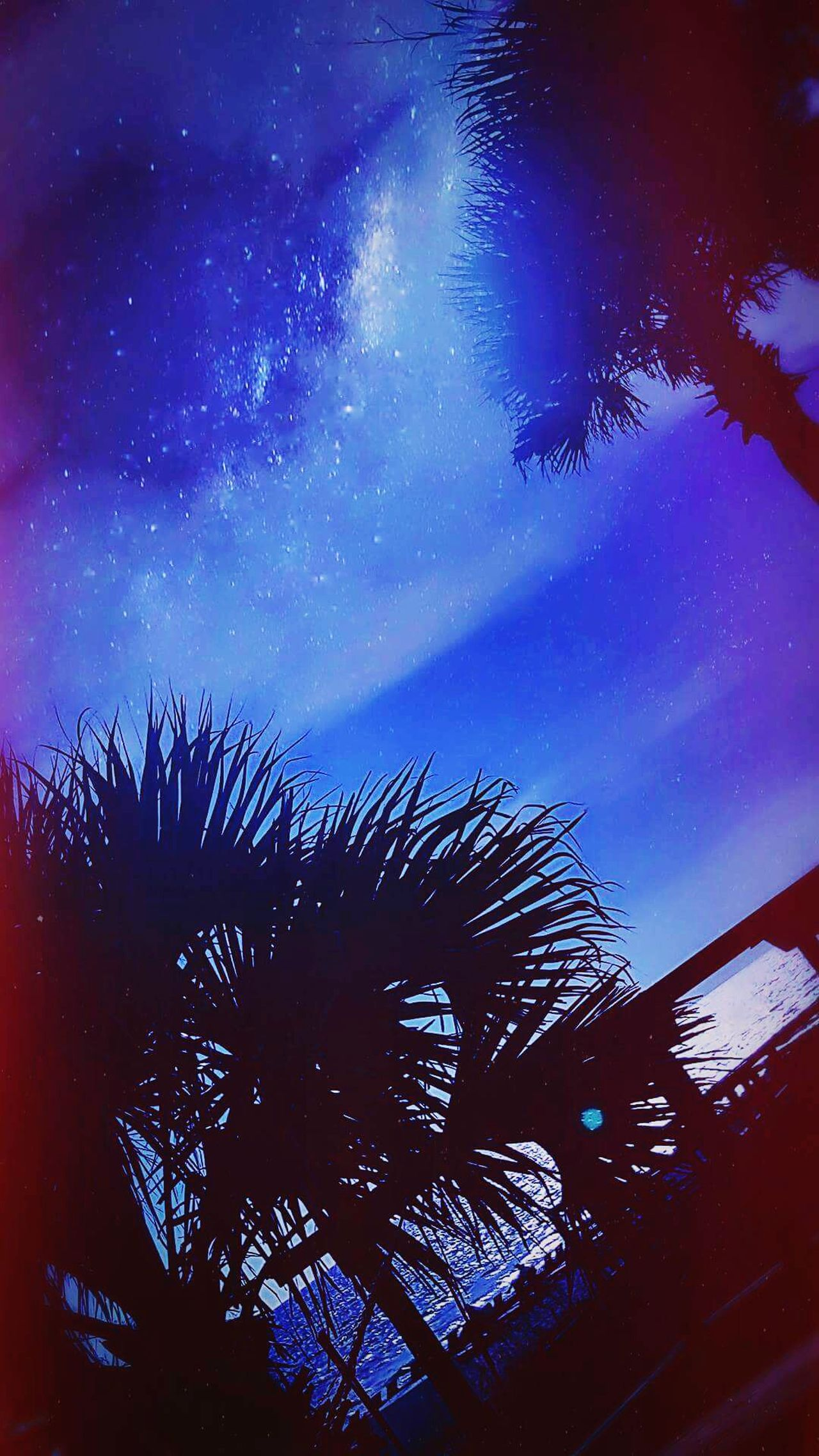 Star - Space Sky Tree Astronomy Night Beauty In Nature Palm Tree No People Tranquility Nature Silhouette Star Trail Scenics Outdoors Galaxy Milky Way Backgrounds Constellation Space