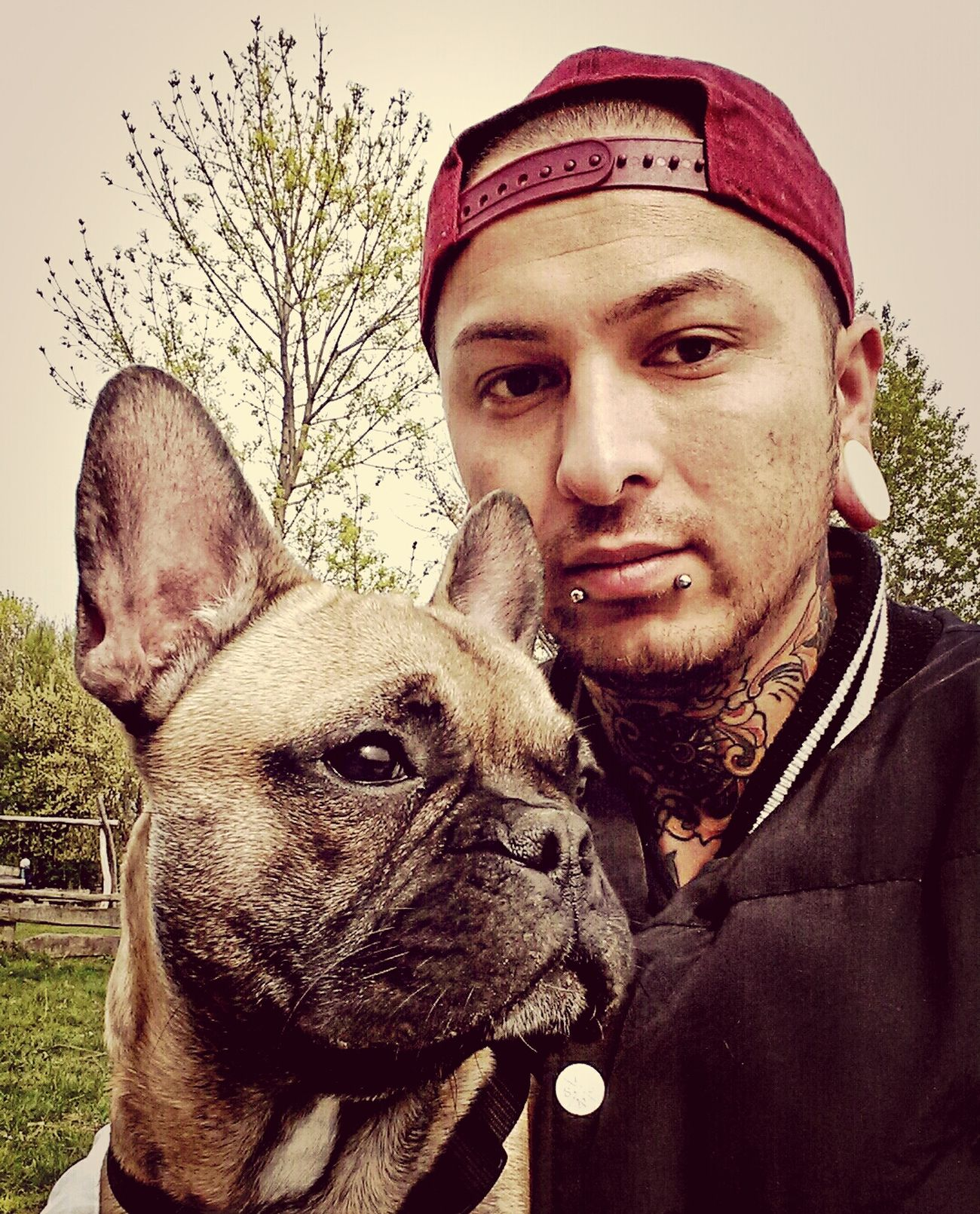 Esseesse Tattoo Frenchbully Frenchbulldog