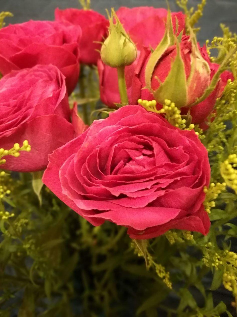 Kenyan rose Petal Flower Beauty In Nature Fragility Flower Head Rose - Flower Close-up Leica Lens EyeEm Gallery HuaweiP9 EyeEm Hong Kong Art Is Everywhere Flowerporn Flower Photography Flower Collection Flowery Rose Collection