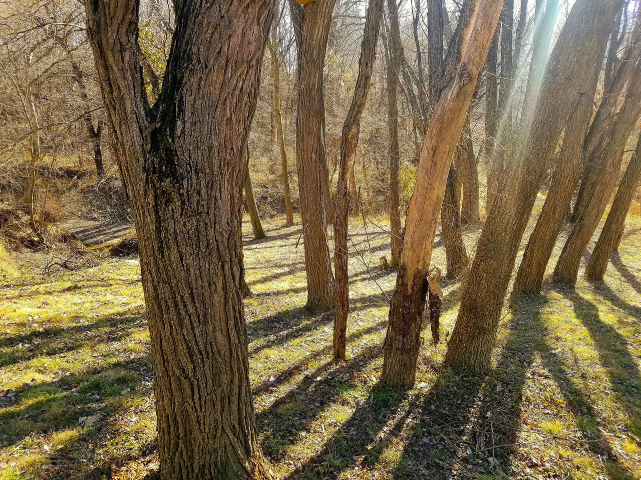 Backyard trees Backgrounds No People Full Frame Nature Beauty In Nature Outdoors Day Samsung Galaxy S7 Edge Eye4photography  Sunlight Sunshafts Shadow And Light Grass Tranquility Tree Trees In Winter