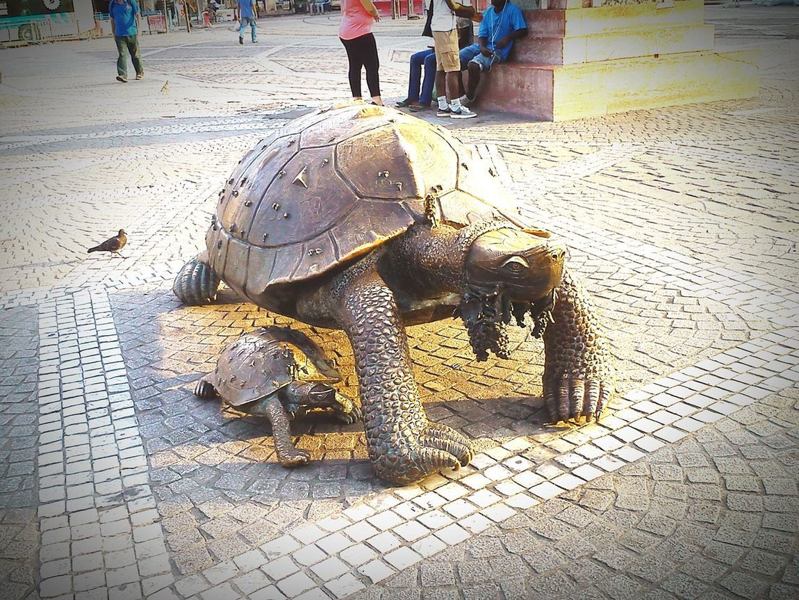 Turtles eating grapes, Victoria Square, Bordeaux Travelling Photography Vineyards  Clusters Grapes Historical Place