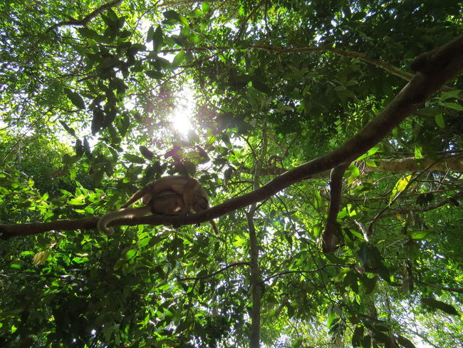 Amazon Amazon - Brazil Amazon Rainforest Amazonas Beauty In Nature Brazil Green Color Low Angle View Nature At Its Best Travel The World Tree