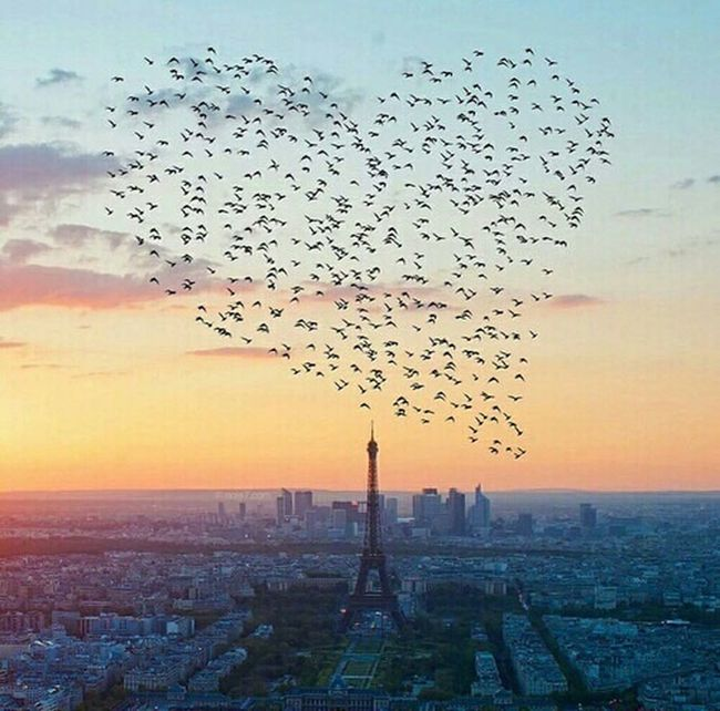 Animal Wildlife Beauty In Nature Bird City Cityscape Cloud Cloud - Sky Flying Freedom Imagination Inspirational Inspiring Landscape Love In The Air Love ♥ Mid-air Nature No People Orange Color Outdoors Paris Scenics Sky Spread Wings Sunset