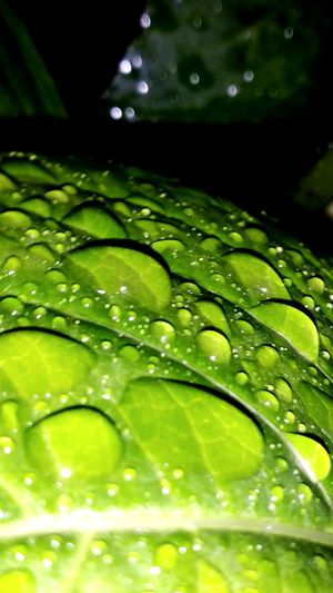 Water Green Color Freshness Nature Leaf Drop No People Beauty In Nature Close-up Outdoors Day Fragility Eyeem Photography EyeEm Best Shots EyeEm Nature Lover Environment Eyeem Market Nightlights Nightshot Scenics Straßenfotografie EyeEm Selects