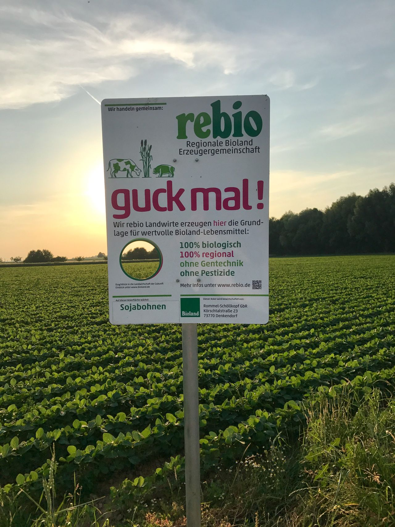 Soja beans with information board on German field Text Sky Field Green Color Communication Cloud - Sky Growth Outdoors No People Agriculture Landscape Nature Day Sunset Beauty In Nature Soja Soja Beans Produce Vegetarian Vegan