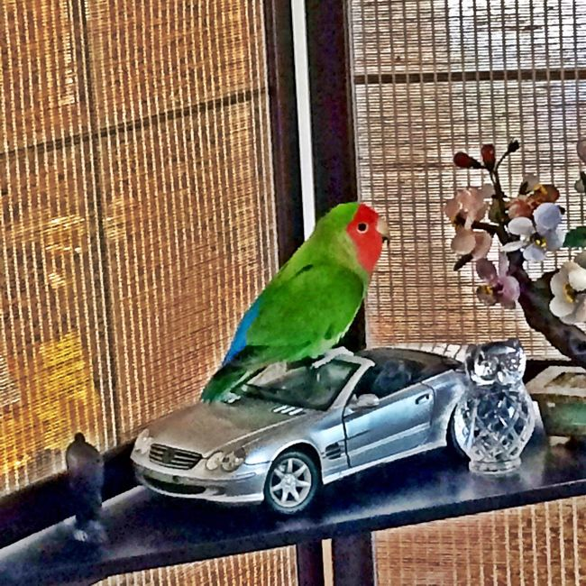 Stupid bird got out of his cage again ! ?? Birds Parrot Funny Picoftheday