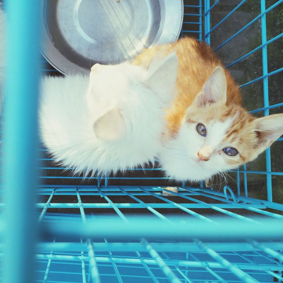 Beautiful stock photos of kitty, Animal Themes, Blue, Cage, Cat