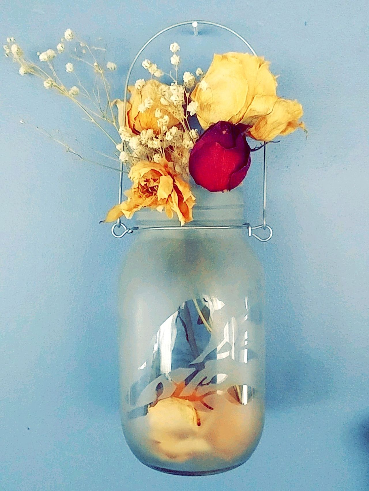 There's beauty in death and rebirth. Colored Background Dried Flowers Flowers Mason Jar Contrast Bright Colors Etched Glass Bird Indoors  Interior Decorating EyeEmNewHere