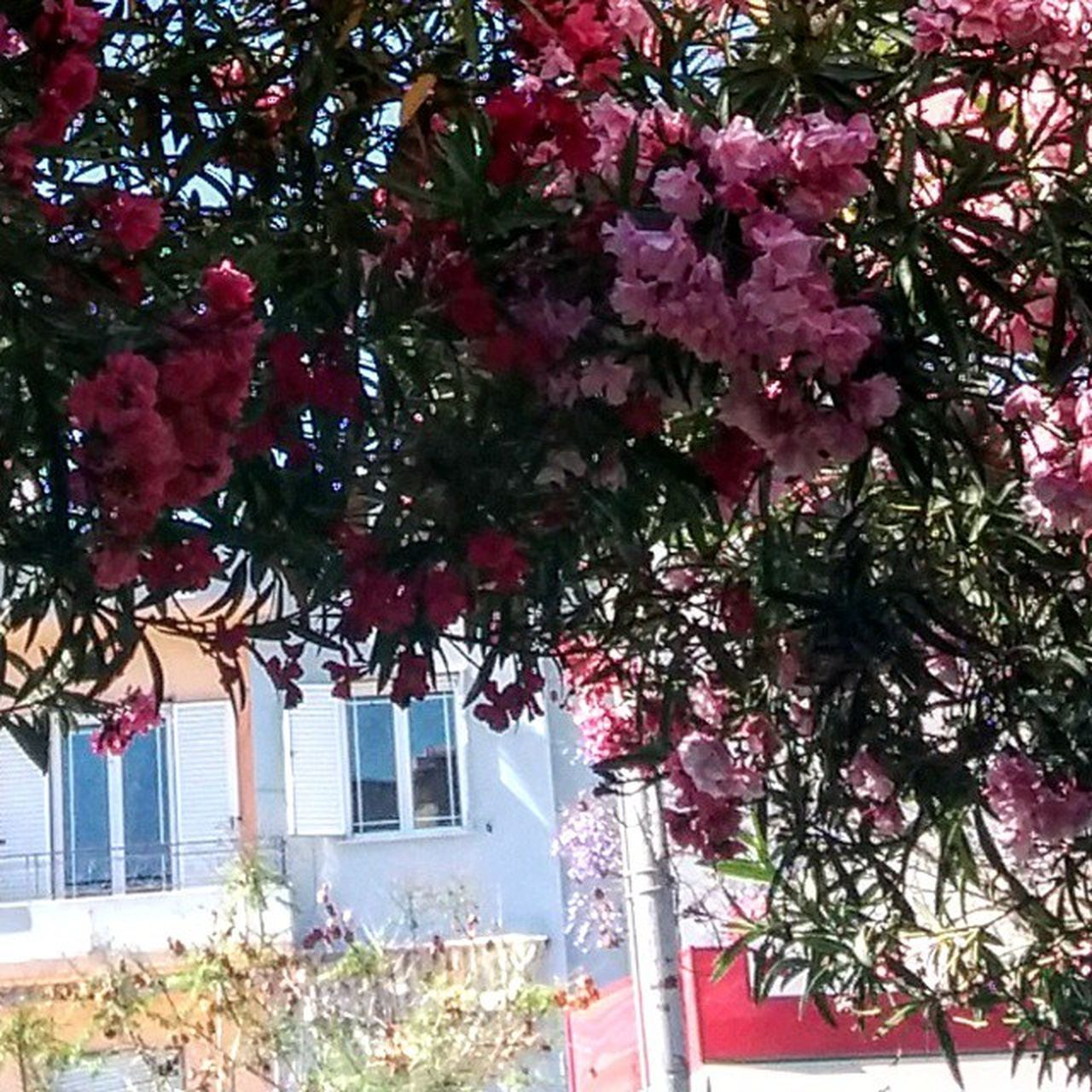 tree, growth, building exterior, architecture, built structure, day, no people, outdoors, plant, branch, nature, flower, beauty in nature, freshness