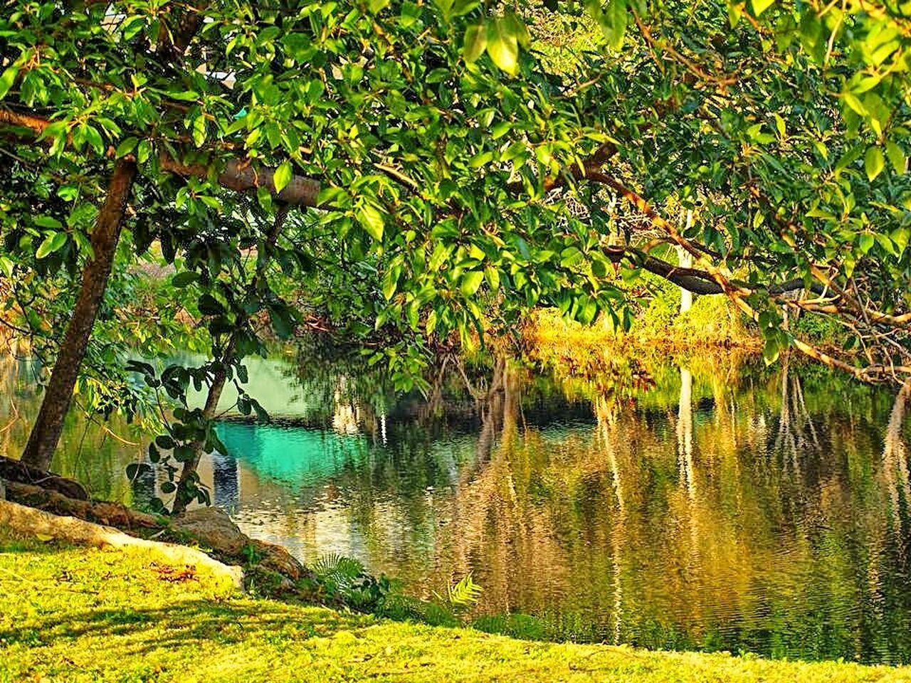 tree, water, nature, lake, scenics, beauty in nature, tranquil scene, tranquility, outdoors, reflection, no people, growth, day, landscape, plant, forest