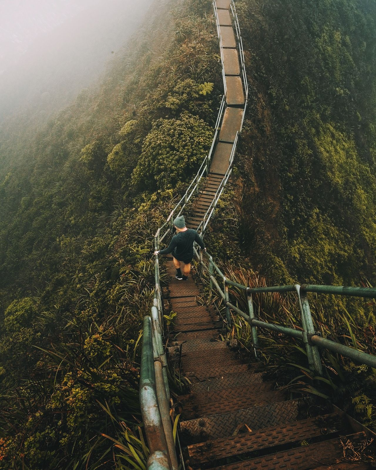 Stairway to Heaven hike. Live For The Story High Angle View Nature Day Landscape Beauty In Nature Growth Mountain Scenics Outdoors Real People Forest Tree One Person Sky People
