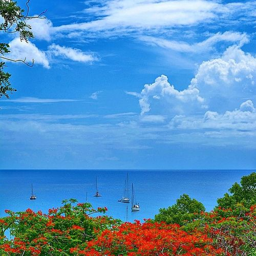 Ig_grenada PureGrenada Livefunner Uncoveryours Westindies_landscape Ig_caribbean Amazingphotohunter Andyjohnsonphotography Theblueislands Ilivewhereyouvacation Pocket_beaches Photo_storee Ig_latinoamerica WORLD_BESTSKY Loves_caribbeansea Loves_puertorico Colors_ofourlives World_beautiful_landscapes Grenada Andyjohnsonphotography