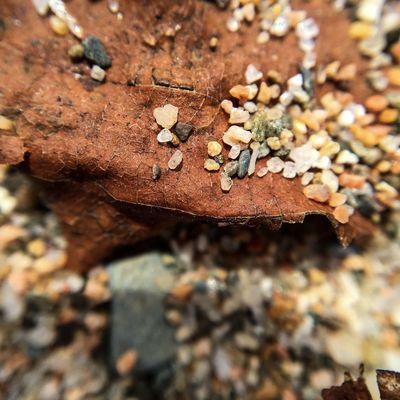 More jewels? Gambo Pond Gambo Newfoundland Iphonography Shot On IPhone 6s