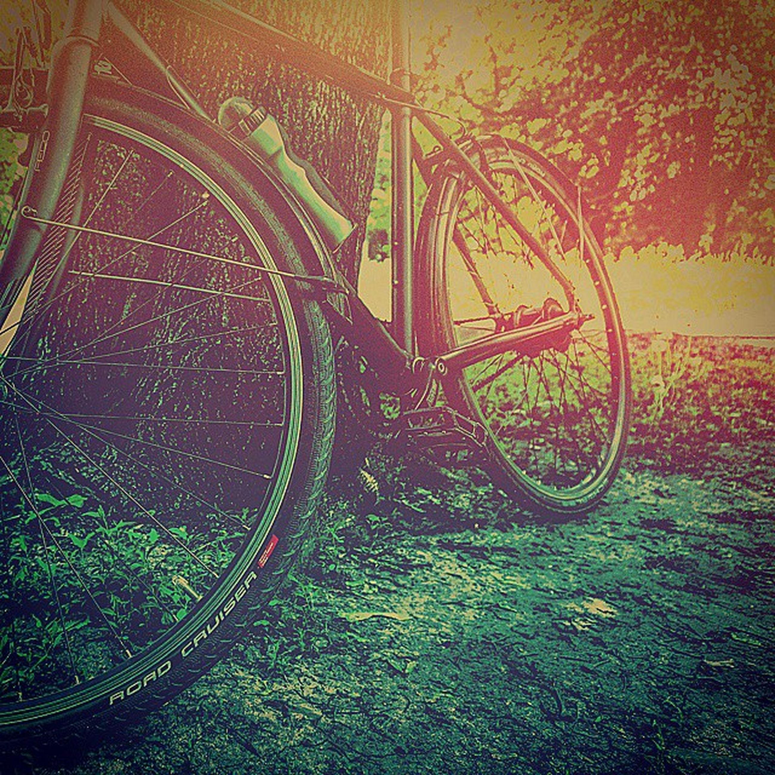 grass, bicycle, plant, no people, wall - building feature, growth, nature, outdoors, day, field, sunlight, transportation, close-up, wheel, green color, land vehicle, high angle view, tranquility, built structure, old