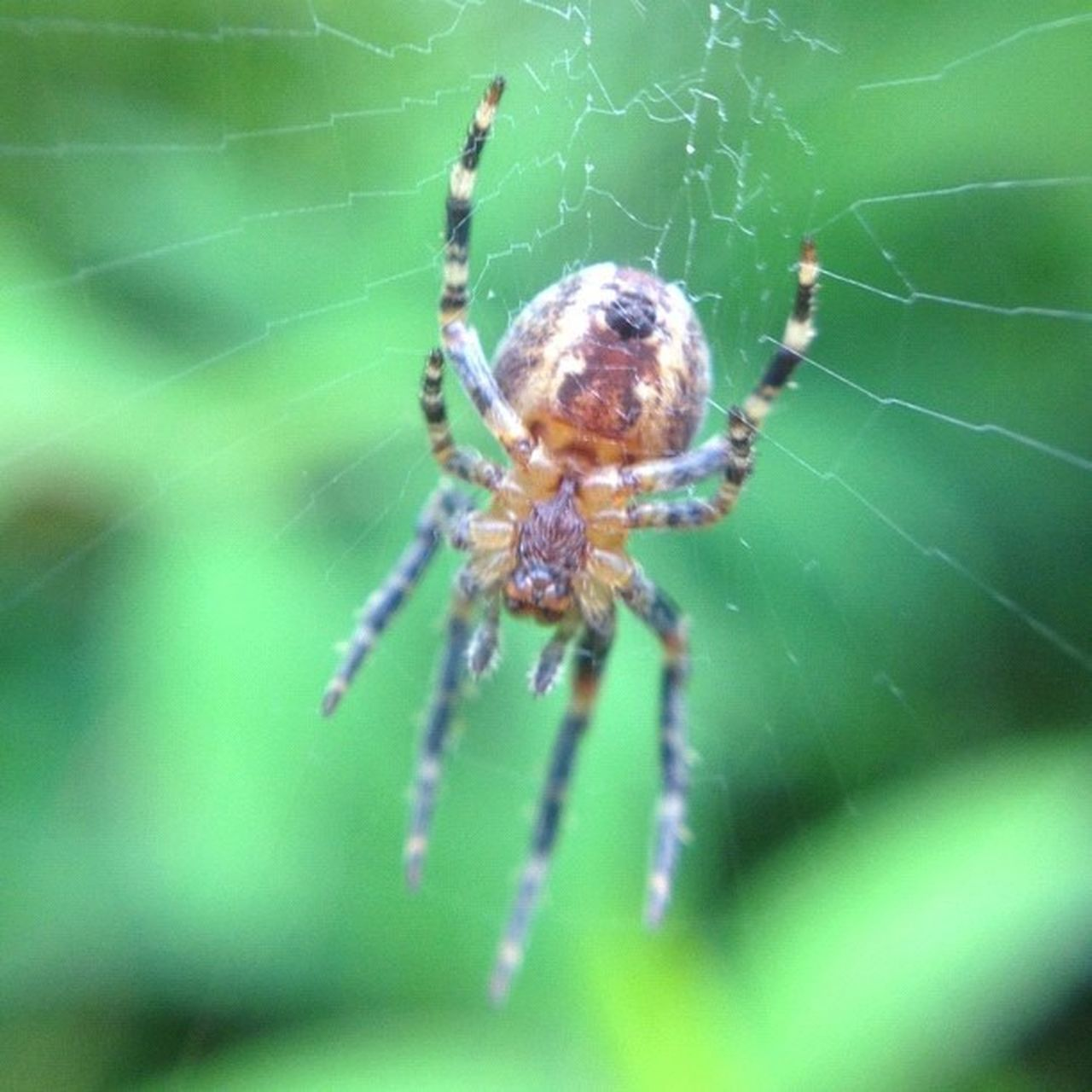 Image created with #Snapseed Spider Snapseed Improvedimage