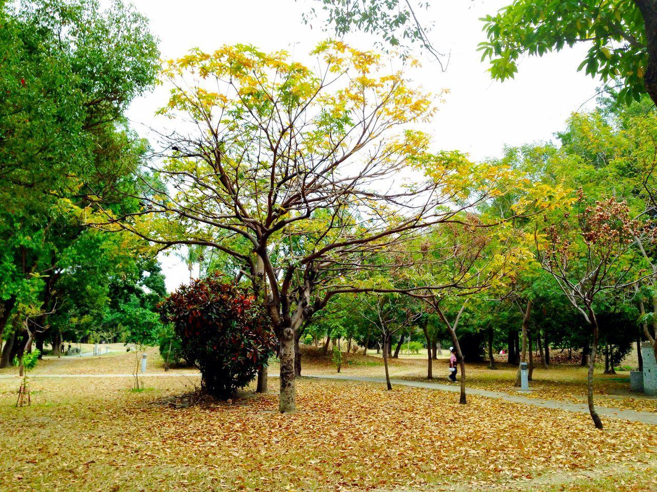 Trees Defoliation Landscape Park
