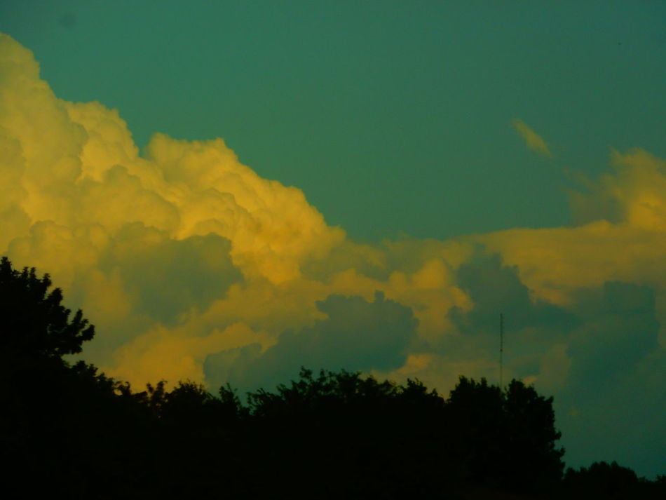 Atmospheric Mood Beauty In Nature Branch Cloud - Sky Cloudscape Cloudy Day Dramatic Sky Growth High Section Low Angle View Majestic Nature No People Non-urban Scene Outdoors Outline Scenics Silhouette Sky Solitude Tranquil Scene Tranquility Tree Treetop