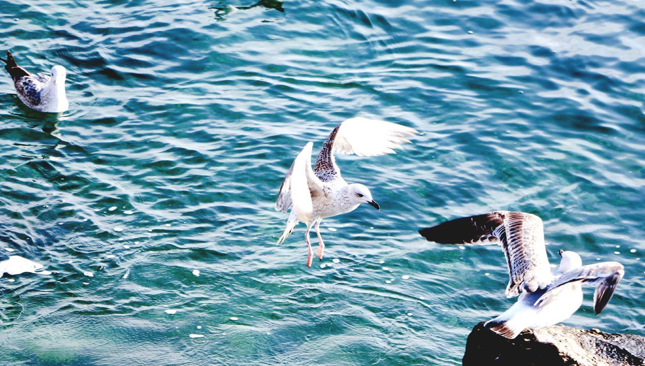Sea Birds December DecemberDays Sunnyweather Freedom Wings Spread Your Wings Seagulls Seagulls And Sea Hometown Constanta Eyemnaturelover Nature Nature_collection Nature Photography Sea Lovers Blue