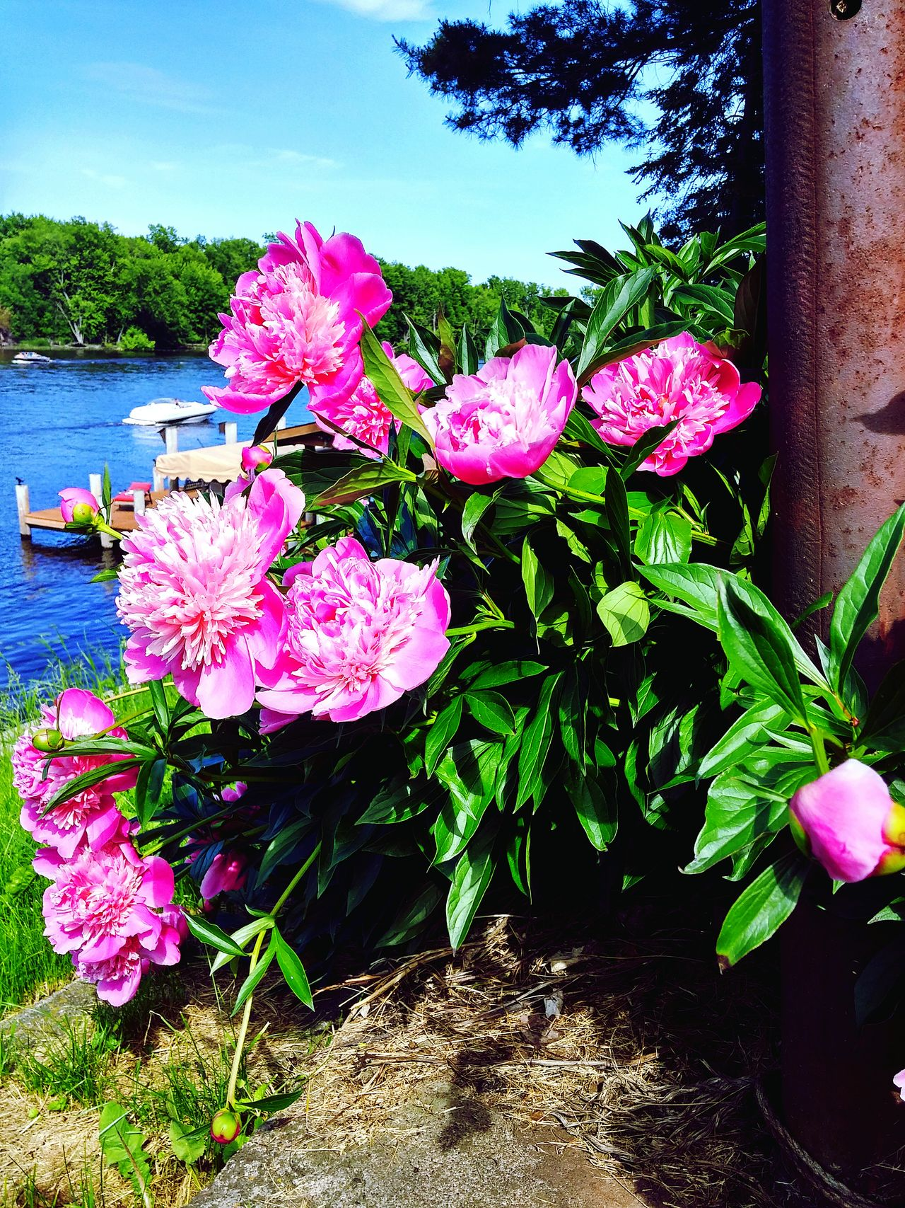 Colour Of Life Wolf River Flowers Boat Water Scape Blue Sky