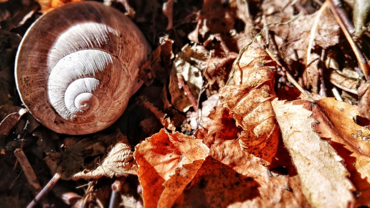First Eyeem Photo Wood - Material Outdoors No People Forest Autumn Snail🐌 Leafs On The Ground Leafes Nature Harmony Nature Smallthings