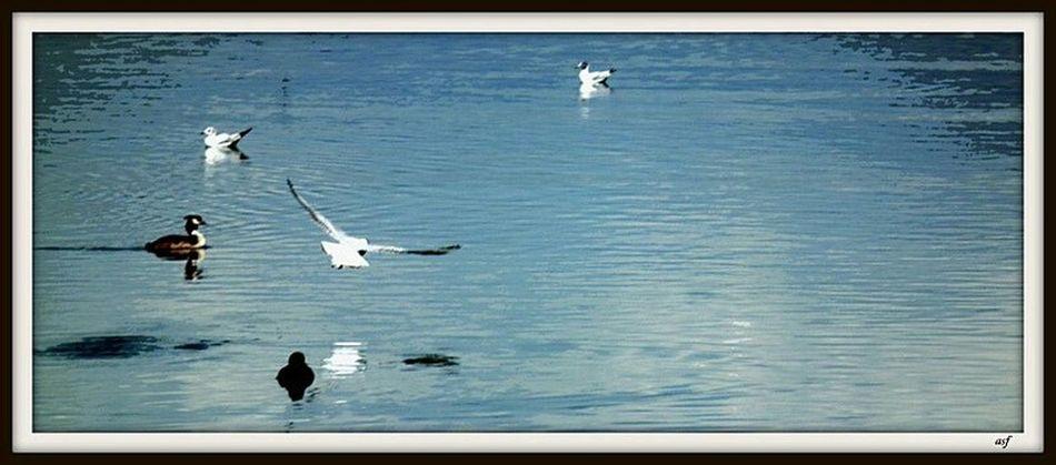 Iznikgolu Water Reflections Birds