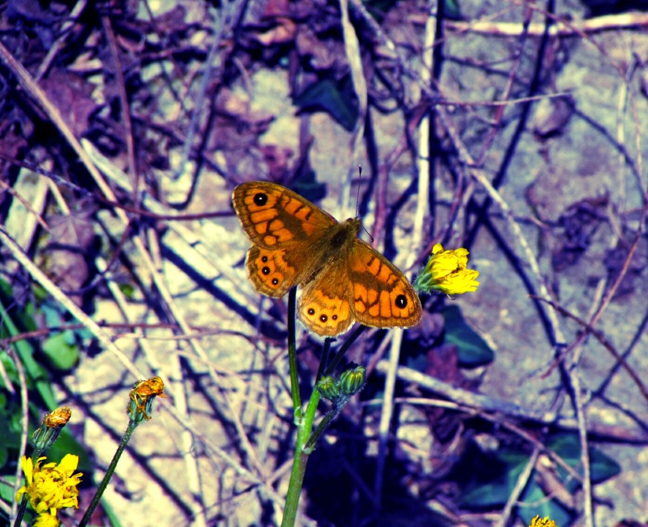 Little beauty between dead branches.. Butterfly ❤ Butterfly Collection Butterfly Butterfly And Flowers Butterfly Macro Flowers Brunches Relaxing Cheese! Taking Photos From My Point Of View My Point Of View Walking Colors Colorfull Light And Shadow Light And Dark Watching EyeEmBestPics EyeEm Best Shots Beauty In Nature Beautiful Nature Nuature Nature_collection Nature Photography