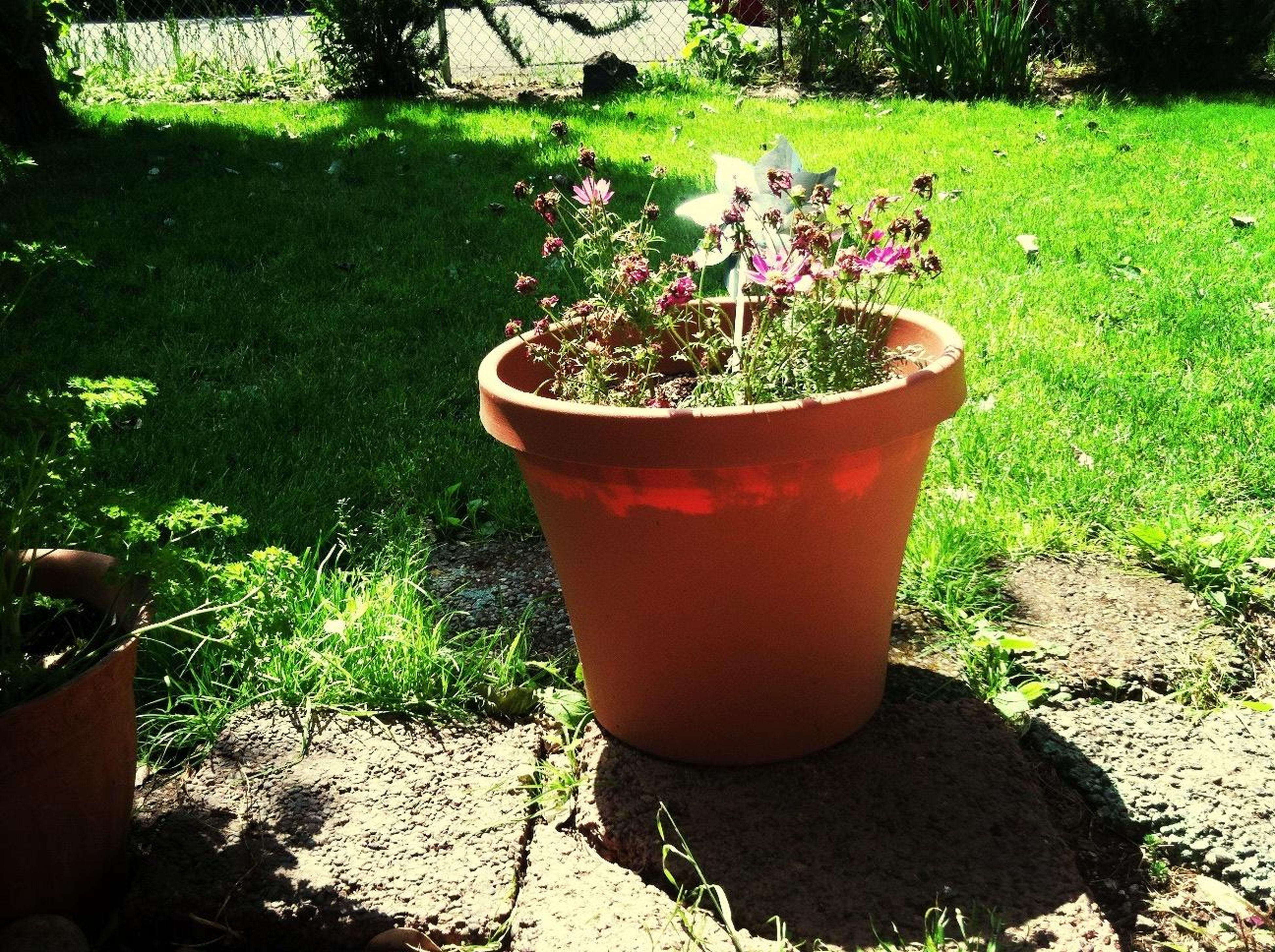 plant, potted plant, growth, front or back yard, freshness, green color, outdoors, table, close-up, flower pot, grass, sunlight, high angle view, day, no people, chair, red, still life, container, drink