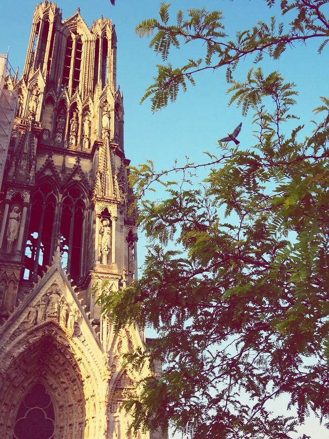 Notre-Dame De Reims Reims Chatedral Cathedrale Bird Architecture Historical Monuments France