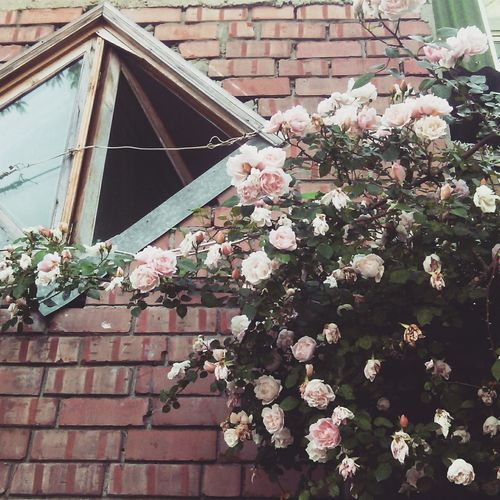 Window Flowers Roses Day I Like It