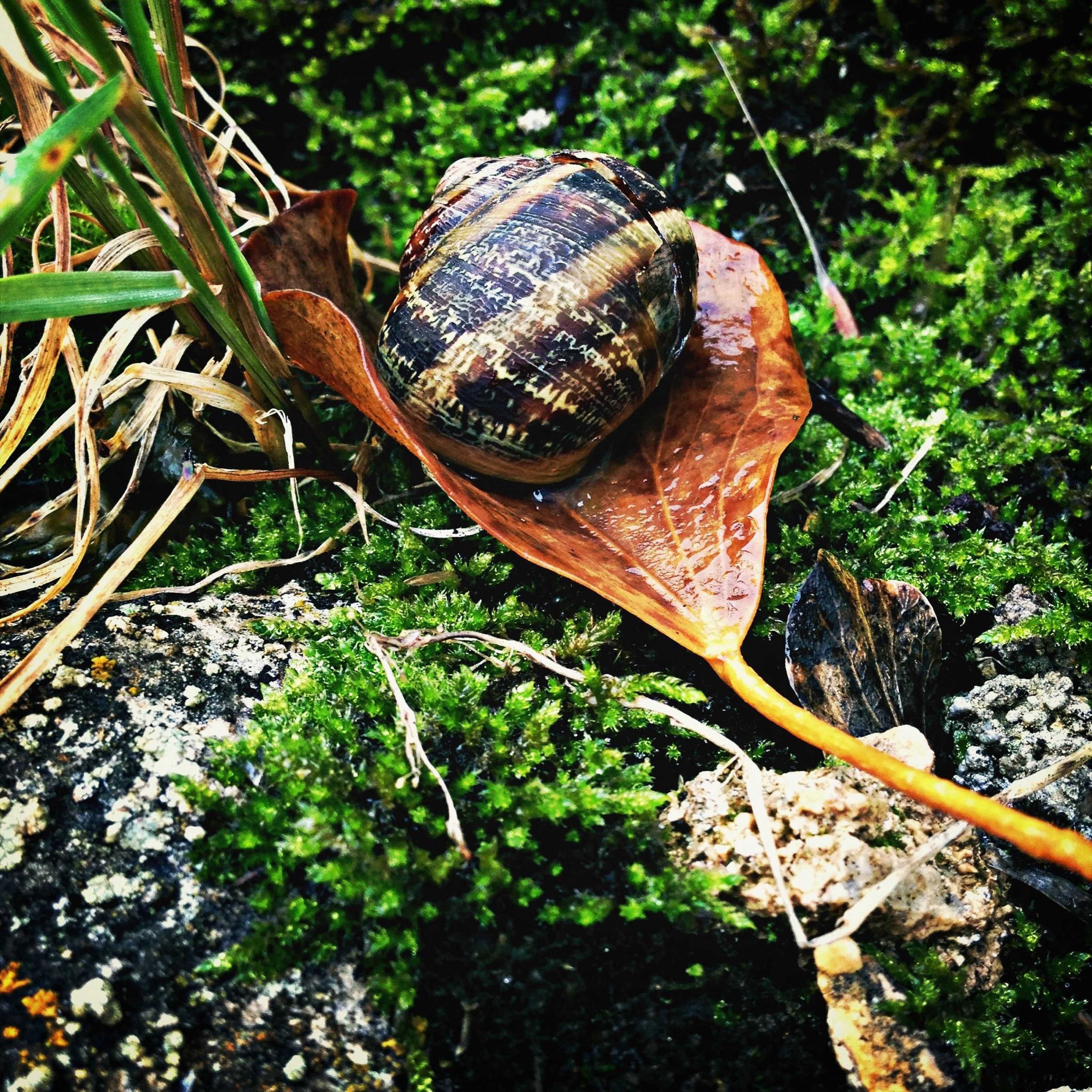 leaf, close-up, mushroom, high angle view, growth, plant, nature, fungus, wood - material, forest, brown, green color, field, day, ground, outdoors, animal shell, no people, snail, abandoned