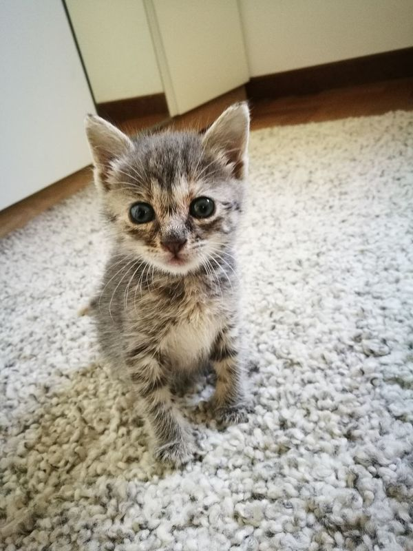Domestic Cat Pets Domestic Animals One Animal Animal Themes Mammal Feline Indoors  Looking At Camera Whisker Portrait No People Day Close-up Kitty Cat Watching Cat Photography Cats Of EyeEm Kitty Love♥ Cat Lovers Kitty Cat Sitting Cat Cute