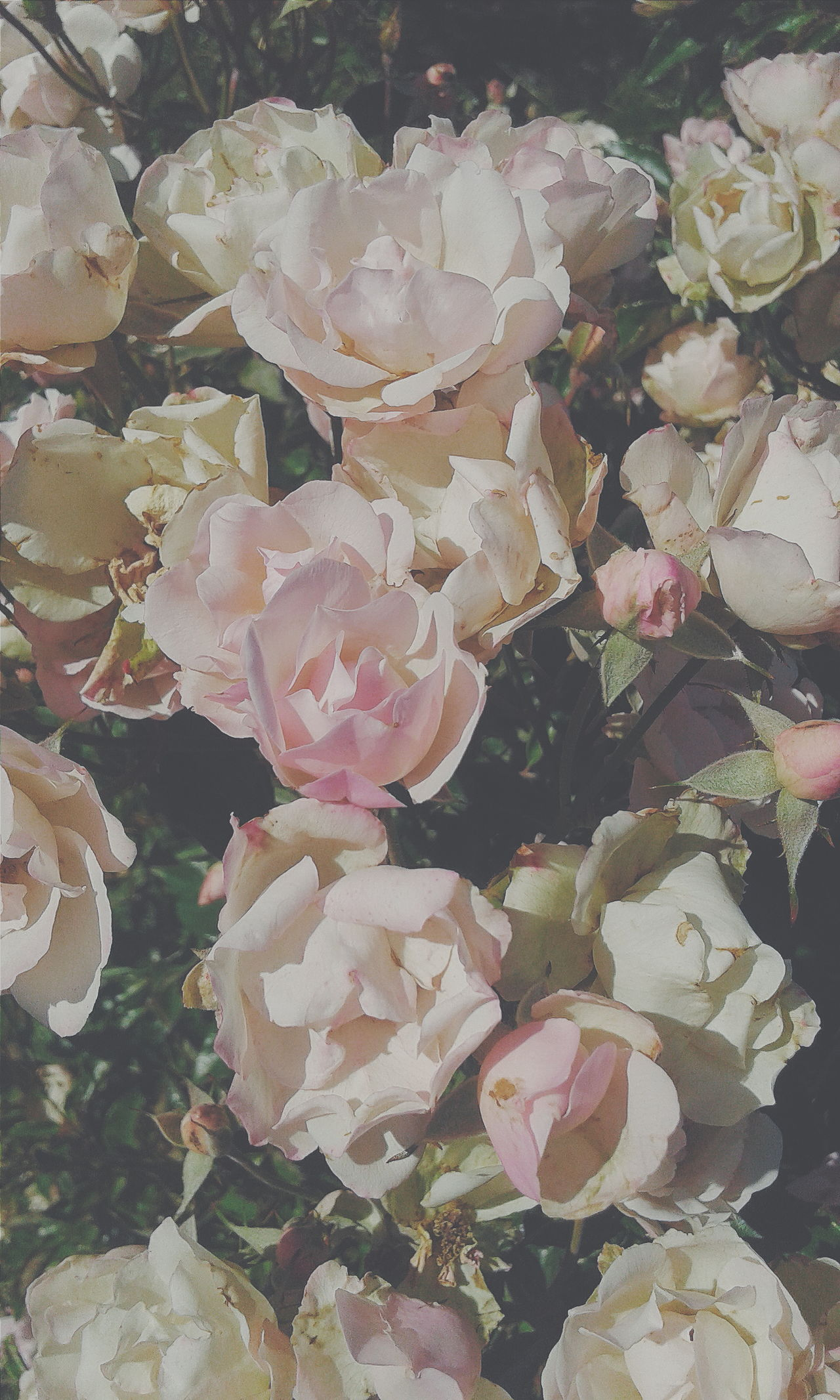Vscocam Flowers Enjoying Life Check This Out Pink Pink Flower Nature Naturelovers Hello World Relaxing Chile Chilena