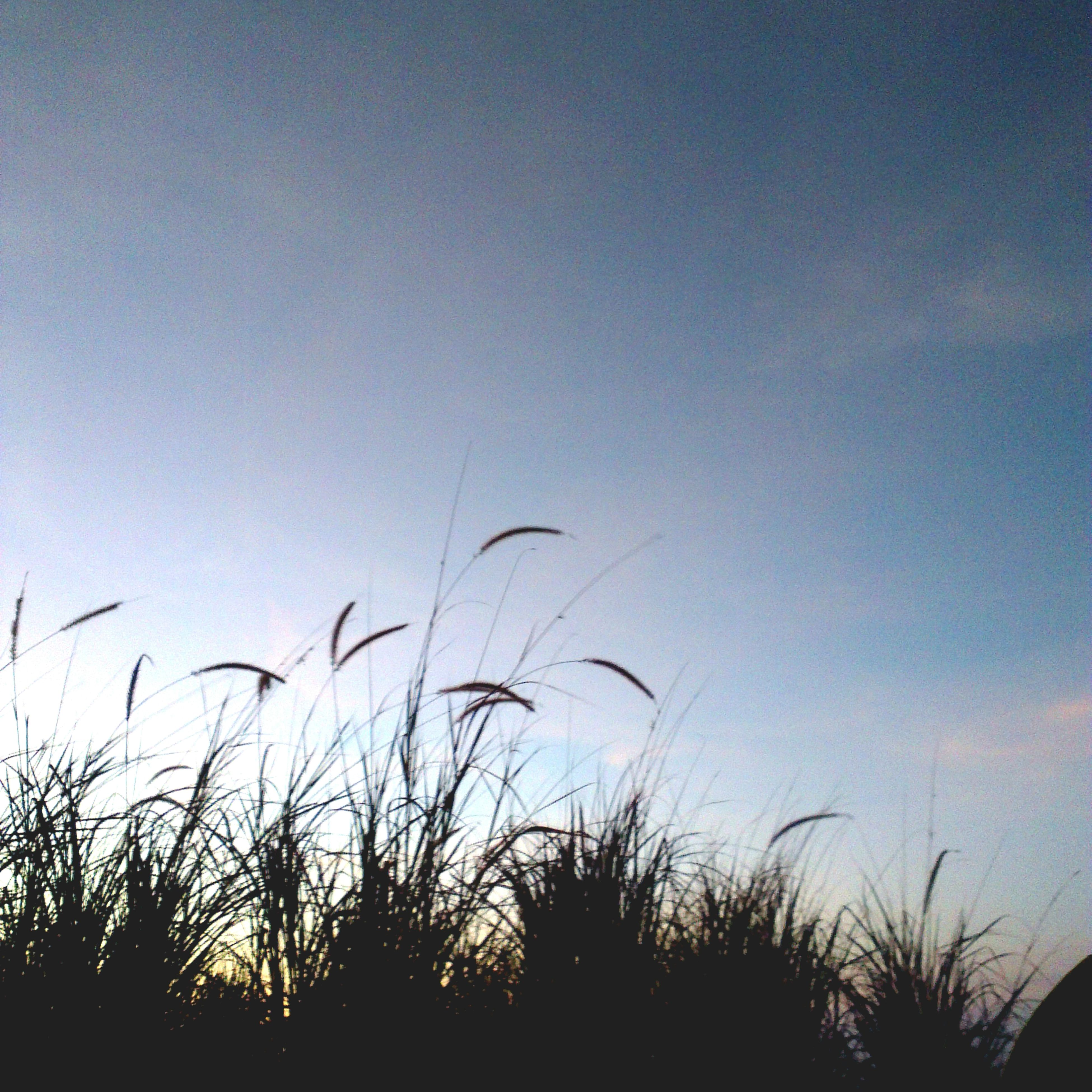 silhouette, plant, sunset, tranquility, sky, growth, nature, beauty in nature, tranquil scene, dusk, field, scenics, grass, clear sky, copy space, low angle view, outdoors, no people, idyllic, outline