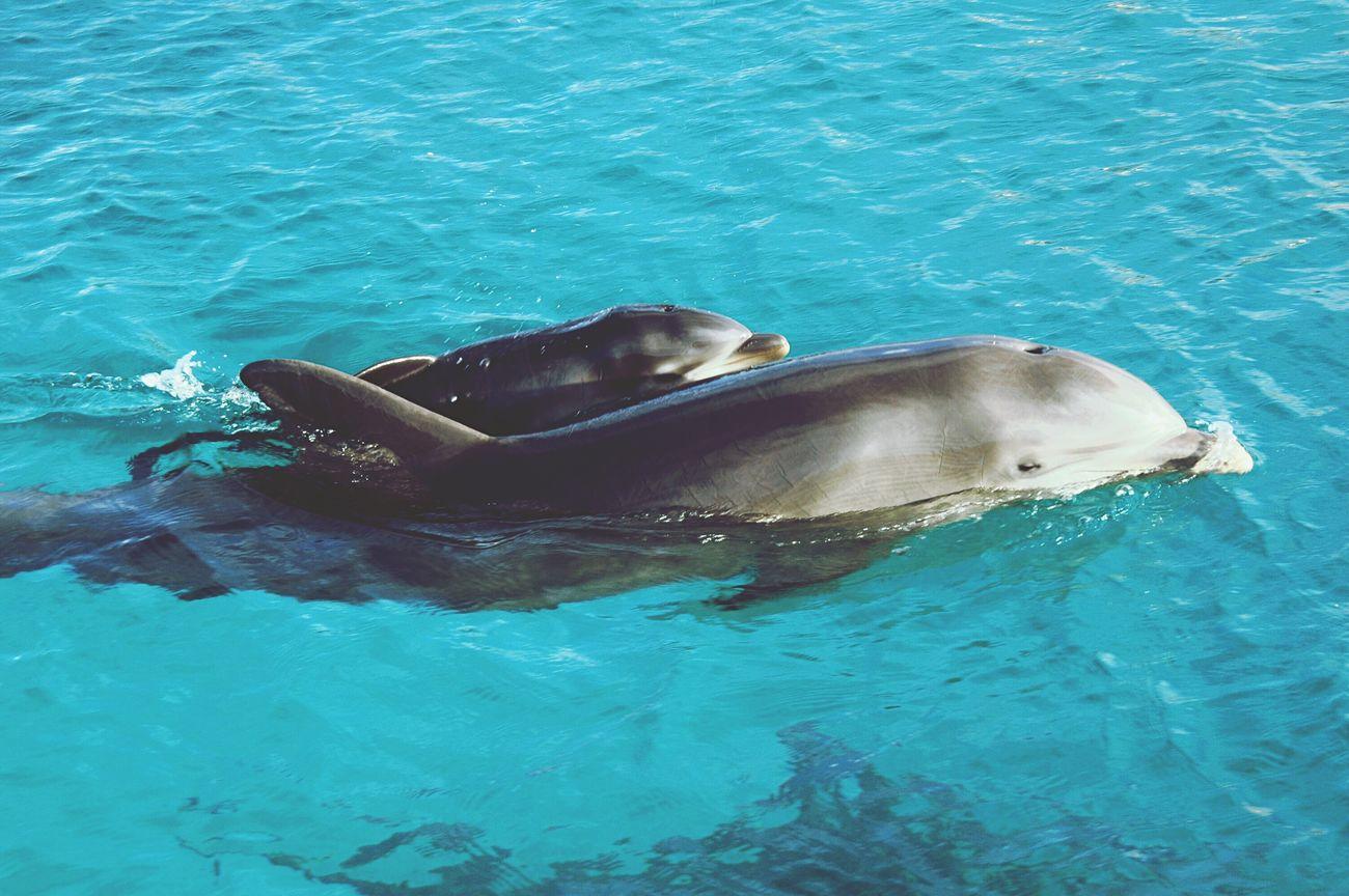 Water Sea Animal Themes Animals In The Wild Swimming Animal Wildlife Aquatic Mammal One Animal Dolphin Nature Sea Life No People Underwater Outdoors Day Swimming Pool Mammal UnderSea Dolphins Goodgirl